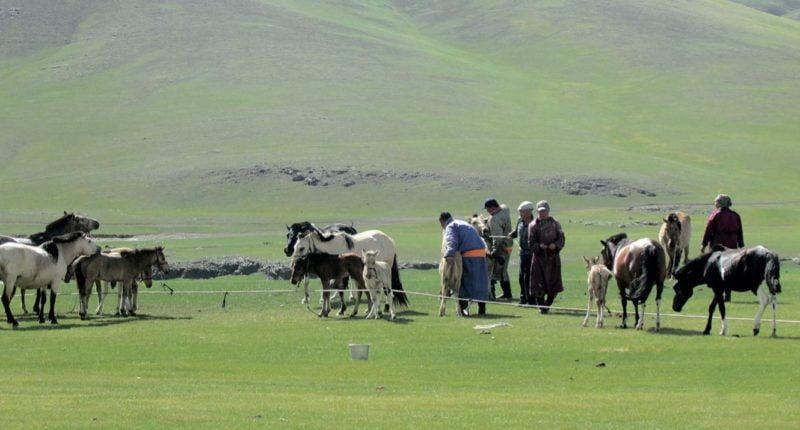 Nomaden und ihre Pferde