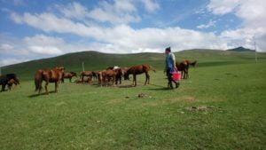 Bei Nomaden in der Mongolei