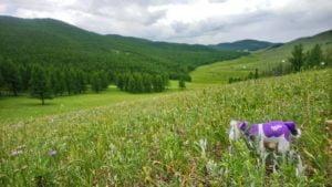 Khangai Gebirge wie Alpen