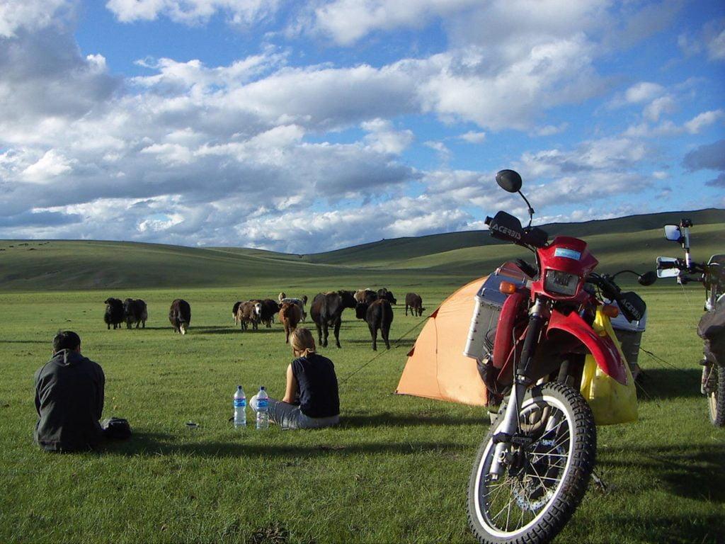 Rast mit Rindern und Yaks