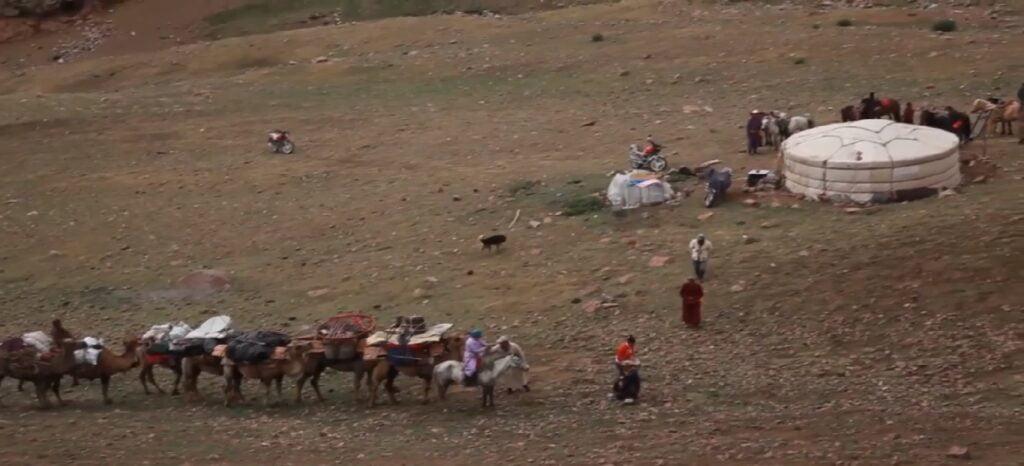 Umzug mit Kamel untergwegs