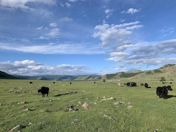 Reiseziel Mongolei Steppe